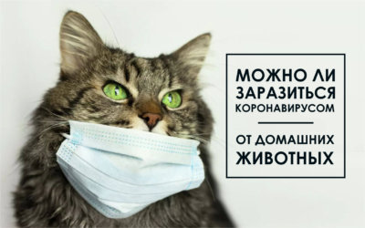 Могут ли домашние животные болеть COVID-19?